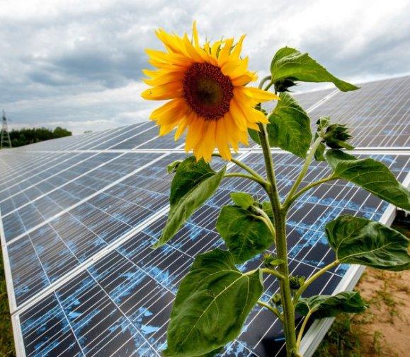 Energa przejmuje farmę fotowoltaiczną