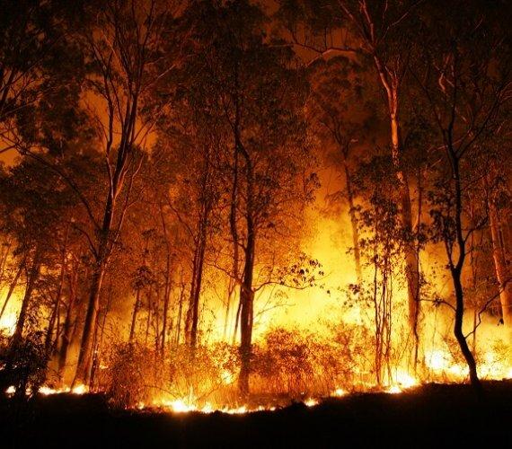 Pożary w Kalifornii: 50 ofiar i 9 tys. zniszczonych budynków