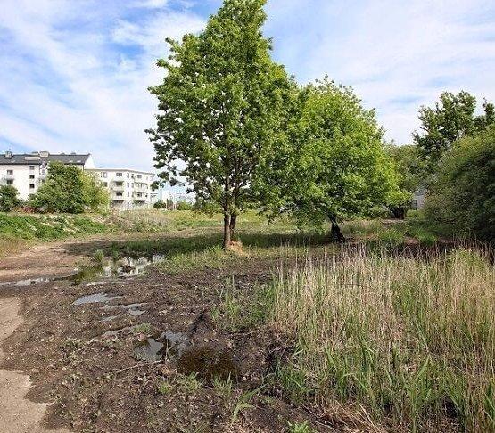 W tym miejscu powstanie park Krzycki. Fot. UM Wrocław