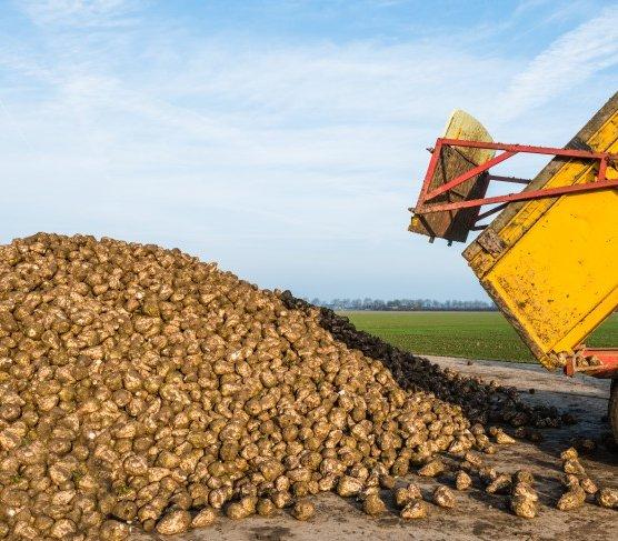 Orlen chce produkować biometan i wodór z biomasy rolniczej