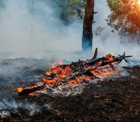Letnie pożary uwolniły do atmosfery ogromne ilości dwutlenku węgla