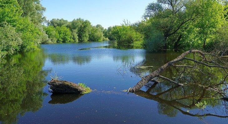 Rzeka Bug. Fot. navorolphotography/Adobe Stock